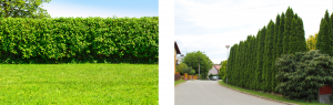 idées-de-clôture-de-jardin-naturel